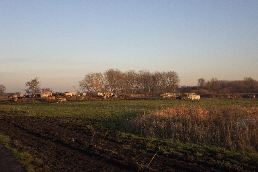 191204-05-Natuurgebied-Het-Twiske