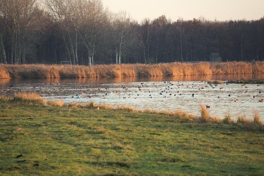 191204-08-Natuurgebied-Het-Twiske